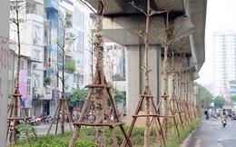 Trồng cây bàng dưới gầm đường sắt: Hà Nội mua thêm việc cắt tỉa làm gì?