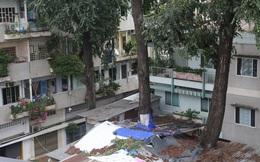 Lạ kỳ hàng cây cổ thụ trăm tuổi mọc xuyên nhà dân ngay trung tâm Sài Gòn