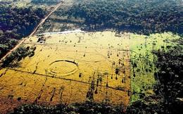Nạn phá rừng lại vô tình làm lộ ra những bí ẩn không ngờ mà rừng Amazon đang cố che giấu