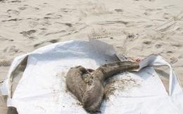 [CẬP NHẬT] Đang họp công bố hiện trạng môi trường biển miền Trung
