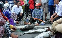 Tỉnh Bà Rịa - Vũng Tàu chỉ đạo khẩn cấp điều tra nguyên nhân cá chết