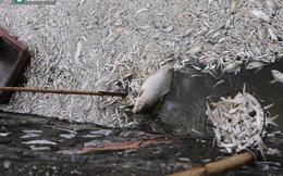 Chủ tịch Nguyễn Đức Chung: Đã vớt khoảng 200 tấn cá chết ở Hồ Tây