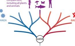 Các nhà khoa học có thể đã tìm ra tổ tiên của sự sống cách đây 4 tỷ năm, xô đổ học thuyết của Darwin