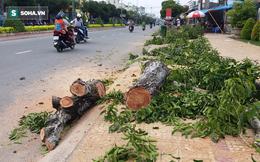 Sóc Trăng: Người dân bất ngờ khi thấy nhiều cây xanh trên 20 năm bị cưa bỏ