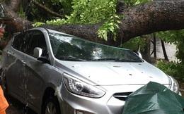 Những con số thiệt hại khủng khiếp của Hà Nội sau bão số 1