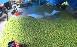 """Cận cảnh công nghệ sản xuất táo """"không thể độc hại hơn"""" ở Hưng Yên"""