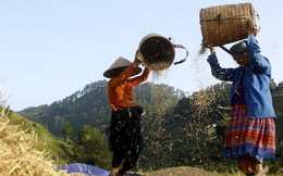 Chỉ 4 năm nữa, nông dân Việt Nam sẽ có thu nhập hàng năm đạt 45 triệu đồng