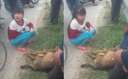 """Cô bé khóc nức nở bên cạnh chú chó bị tai nạn ngày cuối năm """"gây bão"""" mạng"""