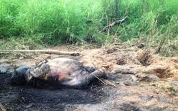 Voi con sa lầy, chết trong Vườn Quốc gia Yok Đôn