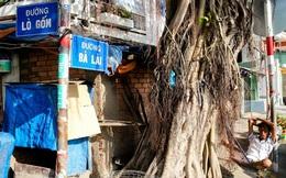 Những con đường nổi tiếng Sài Gòn mang tên người bình dân