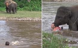 Chú voi con lao xuống sông cứu người trong tình huống cực... đáng yêu