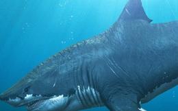 """Phát hiện dấu tích của loài cá """"có họ"""" với siêu cá mập Megalodon"""