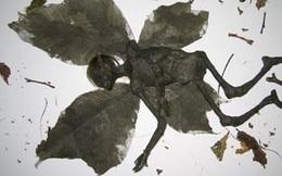 Khám phá bí ẩn về xác ướp sinh vật bước ra từ truyện cổ tích!