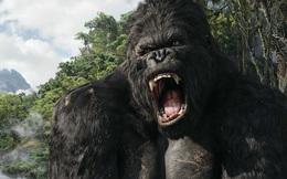 Bị ảnh hưởng, NSX phim Kong: Skull Island gửi thư tới truyền thông VN