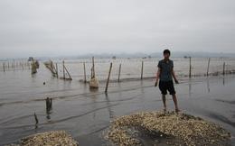 GS Hải dương học: Thủy triều đỏ không tạo ra chất độc để giết cá
