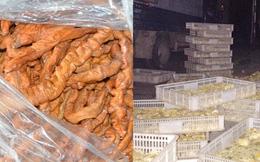 """Ngăn chặn gần 2 vạn gà giống nhập lậu, 2 tấn lòng thối """"đổ bộ"""" vào chợ dân sinh"""