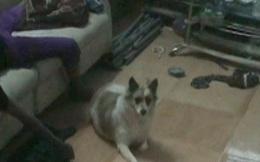 Đồng Nai: Chú chó nhất quyết ngồi bên thi thể chủ nhân khi công an khám nghiệm