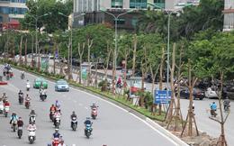 Hà Nội nói về việc trồng phượng trên nhiều tuyến phố