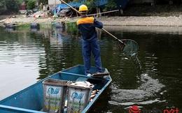 Cá chết lại nổi trên mặt hồ Thiền Quang