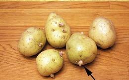 Nếu bạn quen bảo quản khoai tây kiểu này thì thôi ngay vì nó khiến khoai sinh độc tố