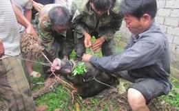 Người đàn ông ngất trong rừng hơn 2 giờ vì bị lợn rừng cắn