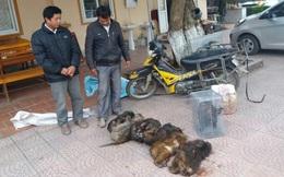 Bắt 2 người đàn ông chở 7 cá thể khỉ mặt đỏ quý đi bán