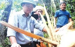 TIN KHÓ TIN: PV bị hành hung vì điều tra chất thải Formosa, lâm tặc phá rừng rất tự tin, bị chồng Trung Quốc đánh vì không giúp làm HDV chui