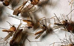 7 mẹo giúp nhà sạch bong bóng muỗi, không sợ Zika