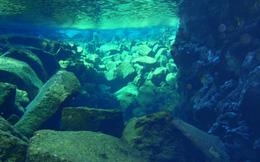 Bất ngờ phát hiện công trình cổ hơn 800 tuổi ở Thái Bình Dương