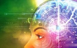 Dung lượng bộ não con người tương đương với toàn bộ các trang web trên thế giới