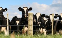 Ngày nay có quá nhiều loại sữa, nhưng đây là 3 loại sữa chuyên gia khuyên bạn nên uống