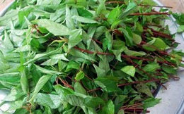 Những người nên ăn rau đay thường xuyên để chữa bệnh