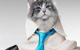 Ông bố biến thành mèo trong phim kỳ ảo gia đình Nine Lives