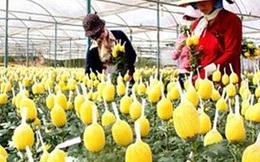 Doanh nghiệp nước ngoài mong gì ở môi trường đầu tư Việt Nam?