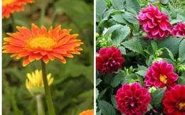 Nên cắm những loại hoa này lên ban thờ ngày Tết để rước tài lộc