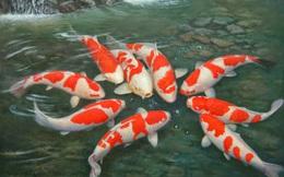 Cá cảnh, tép thủy sinh giá hàng trăm triệu đồng chỉ dành cho giới đại gia