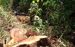 Báo cáo Thủ tướng vụ phá rừng nghiêm trọng ở Lâm Đồng