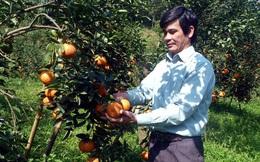 """Xã có đến 41 tỷ phú """"chân đất"""" từ trồng cam sành"""