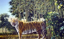 Thử thách tìm con hổ ẩn giấu trong tranh đánh lừa dân mạng