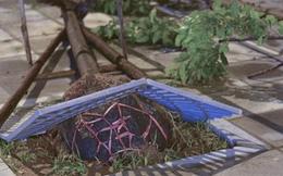 Kiểm điểm vụ trồng cây xanh để nguyên bầu nilon trong tháng 8