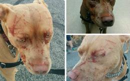 Mèo cào nát mặt... 7 con chó, chủ chó phải nhập viện