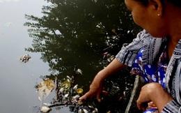 Cá chết trên sông An Cựu là do nước thải sinh hoạt
