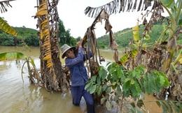 Đình chỉ thi công vô thời hạn thủy điện gây ngập lụt vườn dân