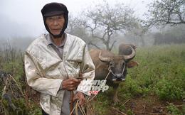 Ở nơi vạn vật và con người trở nên kỳ ảo, 105 tuổi vẫn đi chăn trâu