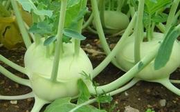 4 loại thực phẩm trong vườn nhà có thể chống nhiễm trùng cực tốt bạn nên ăn thường xuyên