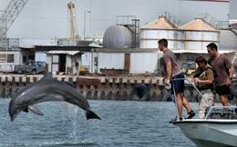 Căn cứ hải quân Mỹ dùng cá heo để bảo vệ khỏi kẻ xâm nhập