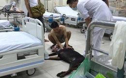 Bỏ người yêu lại để chở chú chó bị trọng thương đi cấp cứu, chàng trai nói gì?