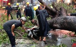 """Chuyên gia """"hiến kế"""" ngăn ngừa cây xanh gãy đổ gây chết người"""