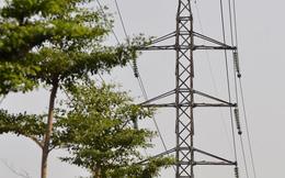 Hà Nội trồng cây dưới lưới điện 110 KV