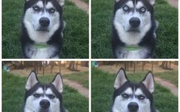 """Chú chó với khuôn mặt """"khinh bỉ cả thế giới"""" trở thành hiện tượng trên Instagram"""